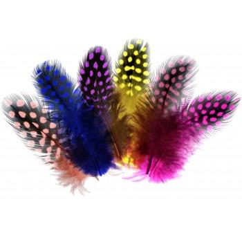 Perlhuhnfedern farbig...