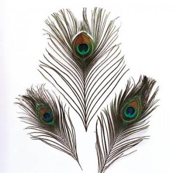 Pfauenfedern 20 - 30cm